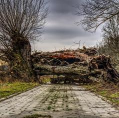 Močan veter podrl drevo čez cesto