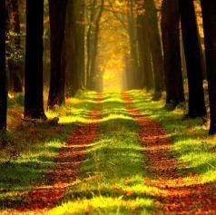Pomembnosti gozdov se moramo naučiti že v zgodnjem otroštvu