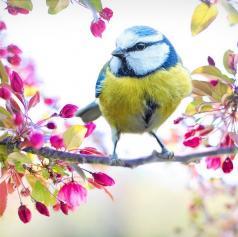 Danes se začenja pomlad