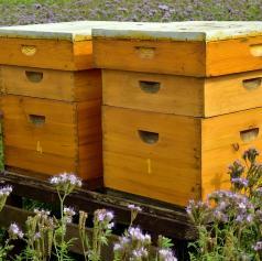 Tatovi posegli po deskah, čebeljih panjih ter gorivu
