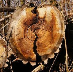 Pri delu v gozdu se je hudo telesno poškodoval
